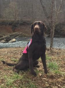 Service Dogs by Warren Retrievers Delivers Diabetic Alert Dog to Transylvania LA