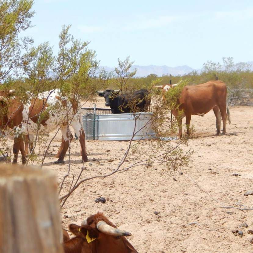 Arizona Cattle Ranch Foreclosures, Short Sales, and Bank Owned REO Horse Property For Sale
