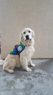 Service Dogs by Warren Retrievers Delivers Autism Service Dog to Child in Coventry CT