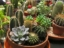 Buy Cactus and Succulent Plants Online From MyBageecha at the Best Rates
