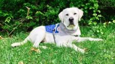 Service Dogs by Warren Retrievers Delivers Diabetic Alert Dog to Ashland, KY