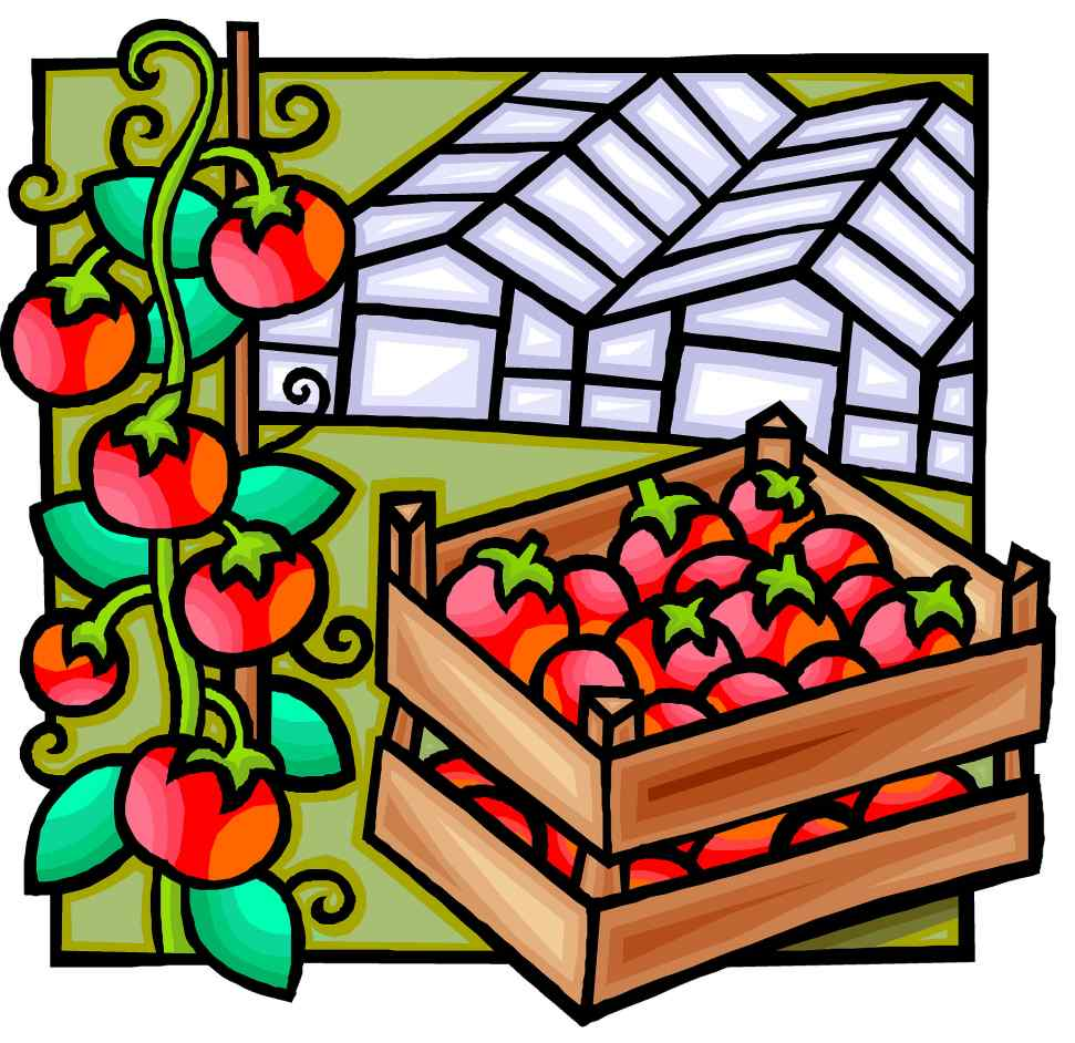 Australian Greenhouse Vegetable Statistics
