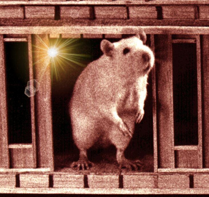 rat haus reality presss