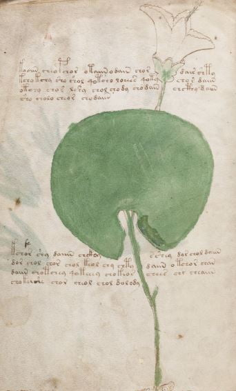 Medieval Voynich Manuscript Is Claimed to Have Been Written in Venezuela