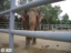 Elephants giving rides at this year's Minnesota Renaissance Festival were abused, says Animal Defenders International