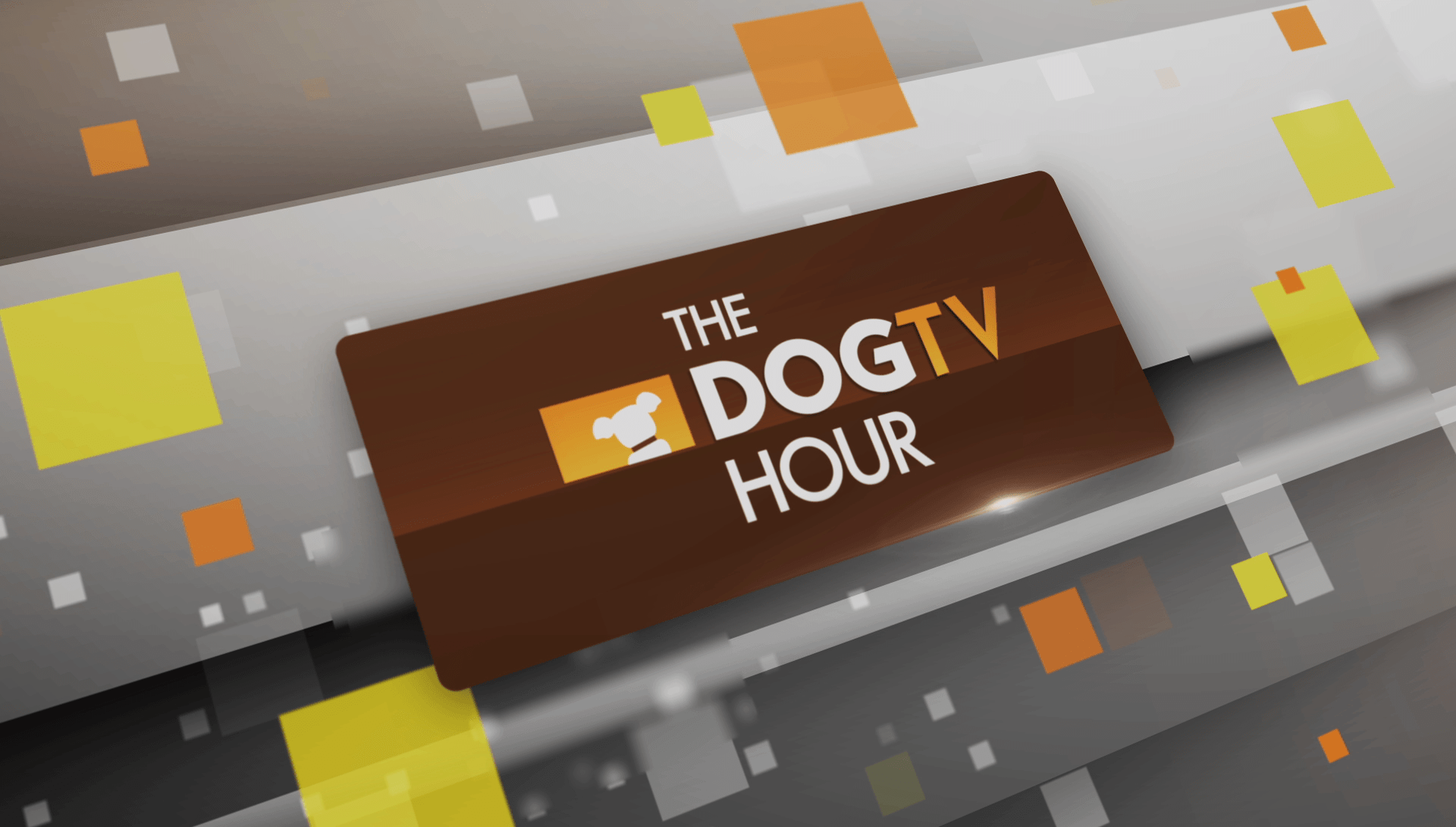The DOGTV Hour – Now on Animal Planet