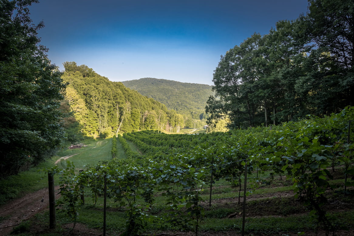 Bethel Valley Farms and Vineyard Hits the Market