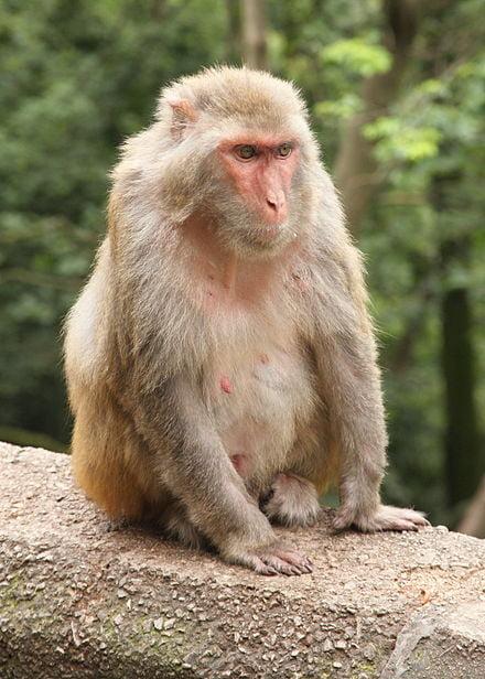 Primate Research Organization Alpha Genesis Recognized in 2018 Grant Thornton SC100