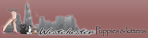 FACEBOOK FANPAGE CREATED TO SUPPORT WESTCHESTER PUPPIES & KITTENS