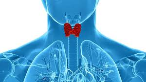 Why do you need to undergo a thyroid test?