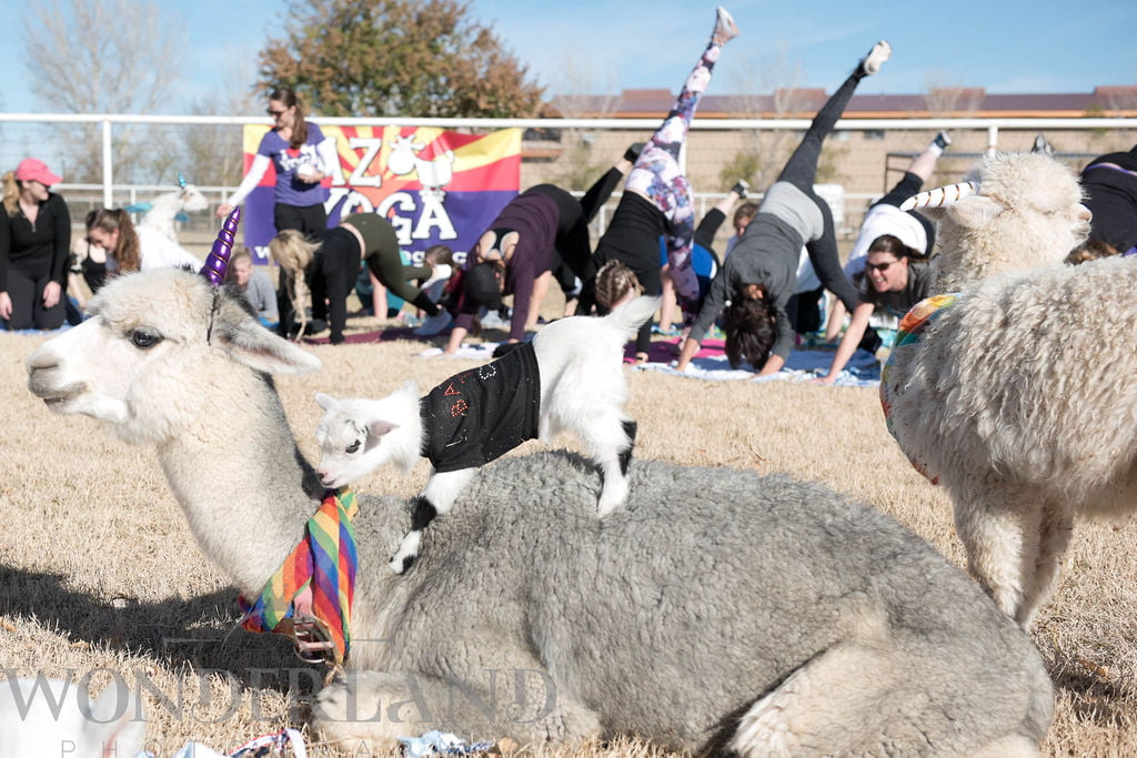 Arizona Goat Yoga is the First Yoga Company to Become a Certified Autism Center™