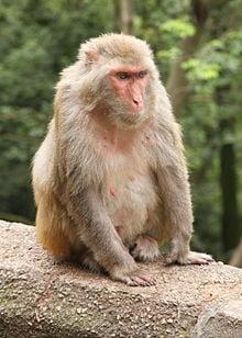 Primate Research Center Alpha Genesis Expands Research Program
