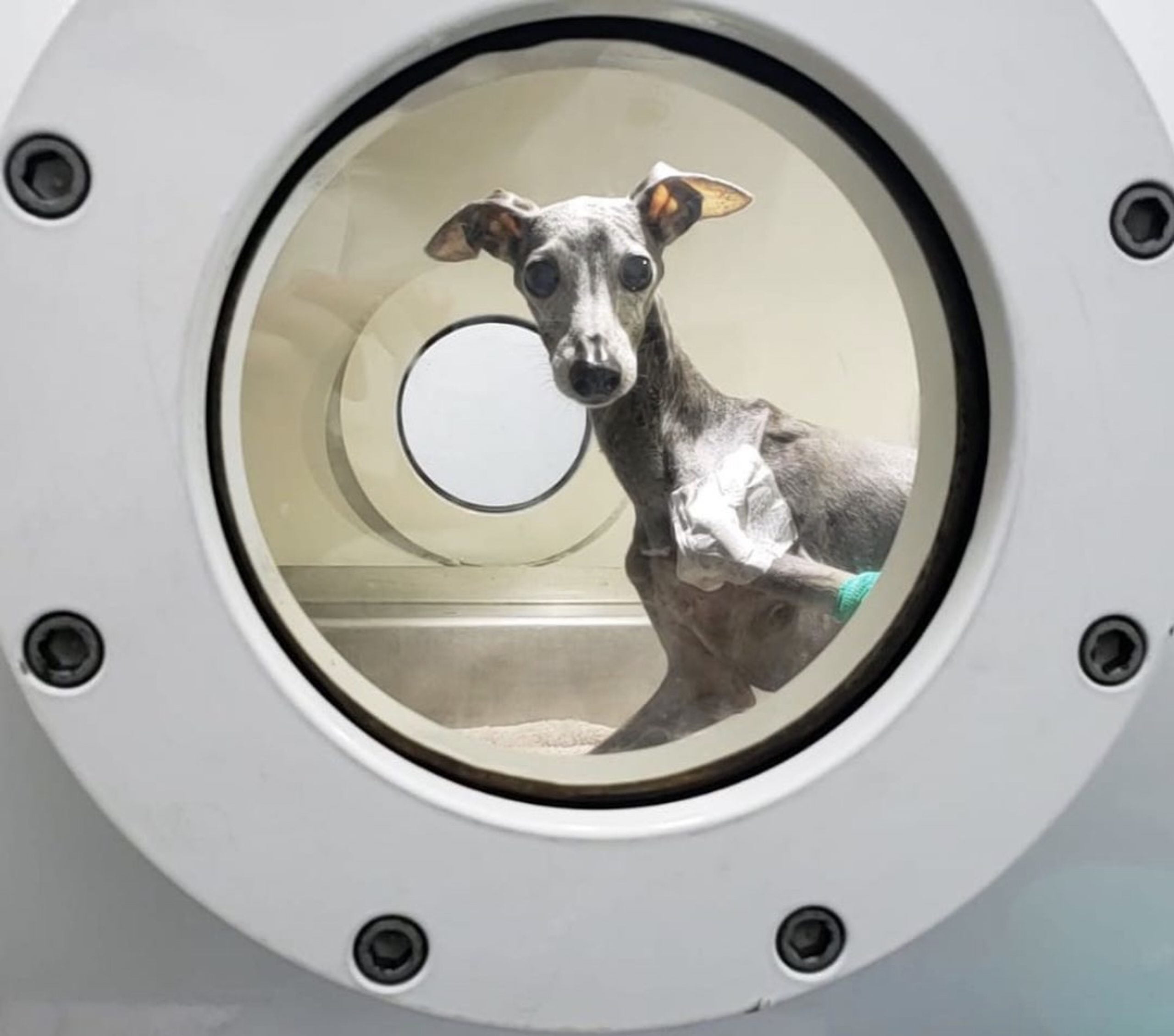 CEO of HVM Travels to Australia for First Veterinary Hyperbaric Chamber Installation and Looks to Help Animals Caught in Wildfires