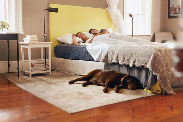 6 Tips For Sound Sleeping With A Dog In Your Bedroom