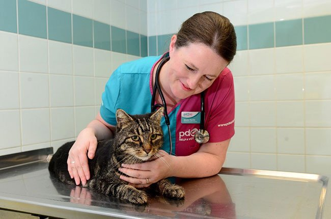 The 5 Essential Skills To Be A Wildlife Veterinary Assistant