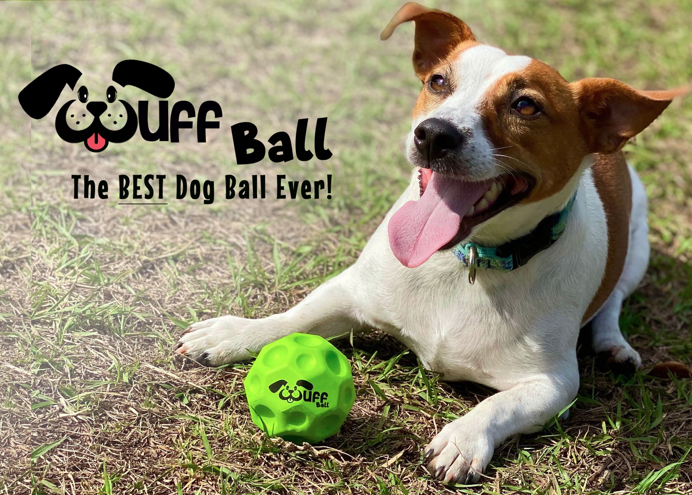 Wuff Ball, The World's Best Dog Ball, Now Available