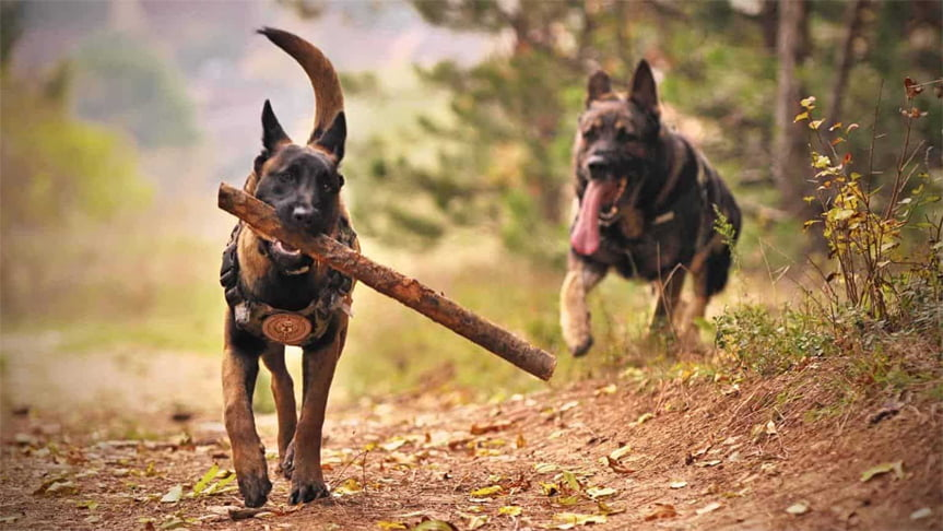 The Working Dogs: What Do they Do Exactly?