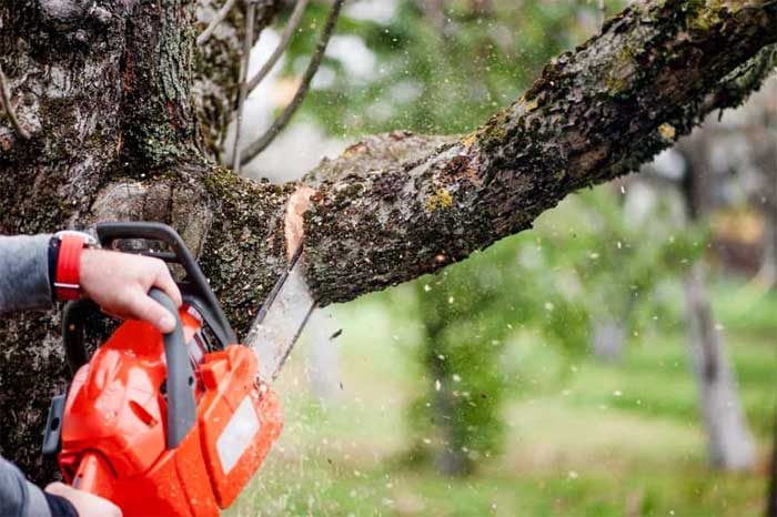 Removing a Fallen Tree from Your Garden: A Guide