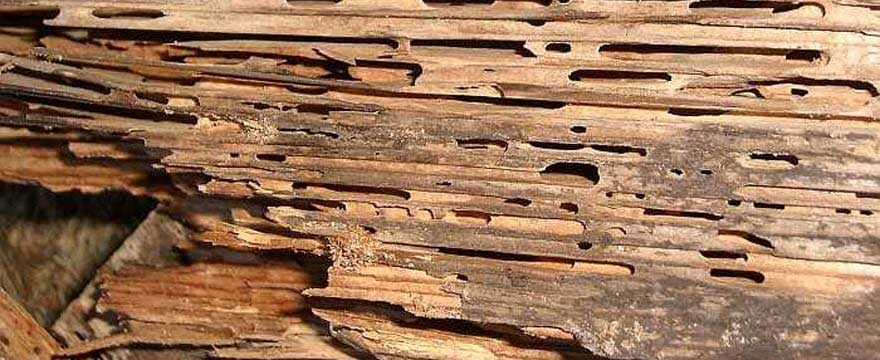 How Much Can Termite Damage Affect the Price of Your House?