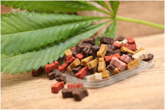 What Are CBD Dog Treats Actually Good For?