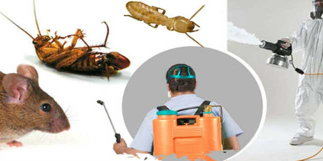 8 Qualities to Look for in a Good Pest Control Company - ePRNews