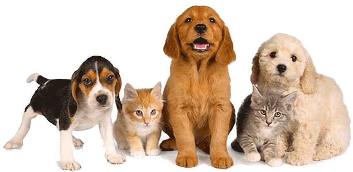 Pet Friendly Drug Rehabs – What Are They?