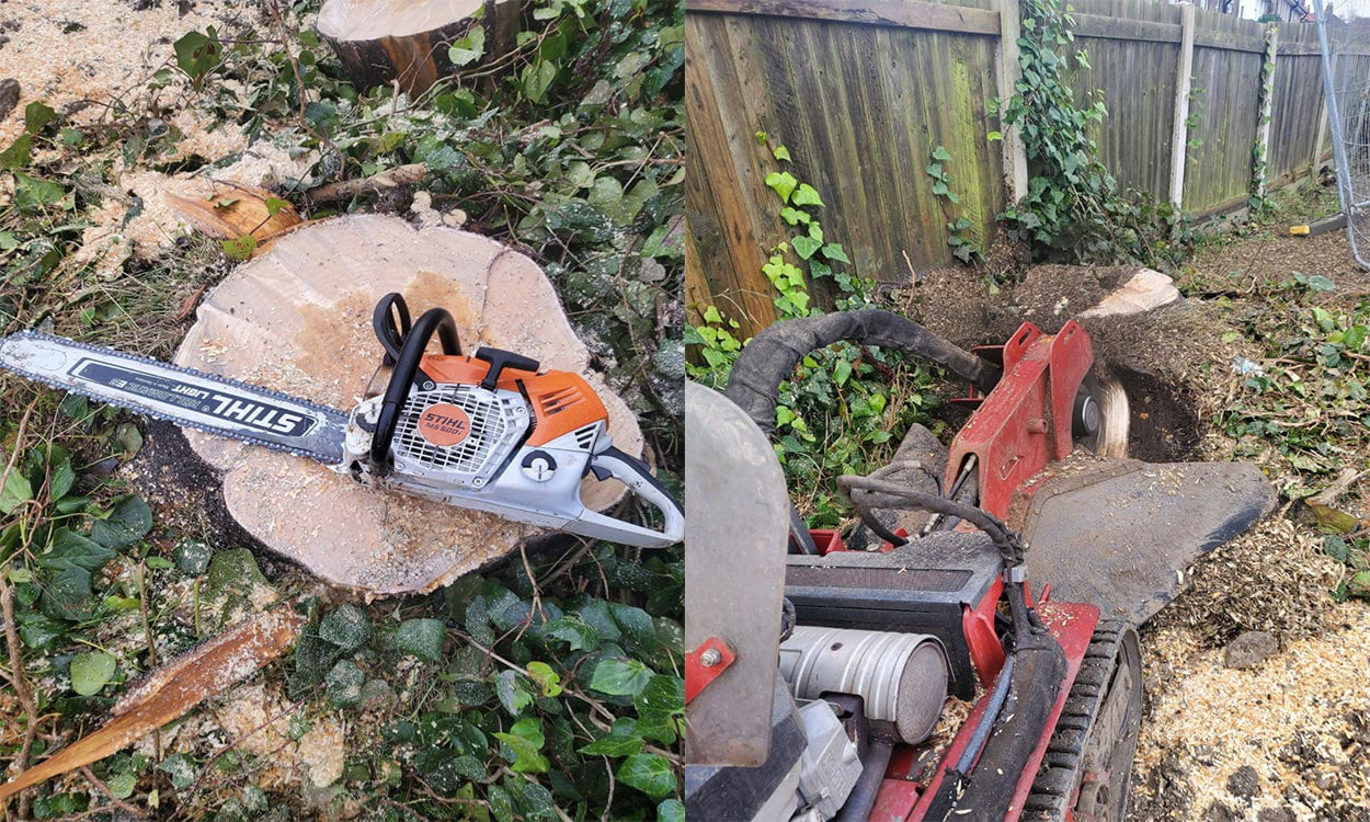 Tree Surgeon – Why Do I Need One As I Can Do It Myself